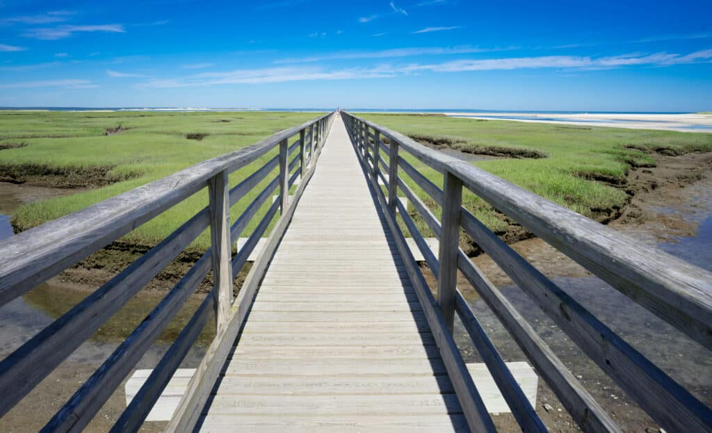 wooden boardwalk with green marshes on both sides