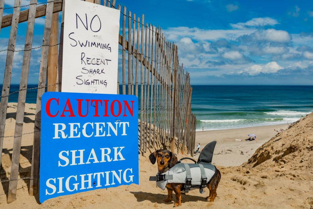 Beach showing Caution Recent Shark Sighting Sign and a dog wearing a shark suite