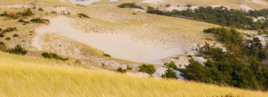 """The dunes in """"The Provincelands"""" at Cape Cod National Seashore in Provincetown, Massachusetts."""
