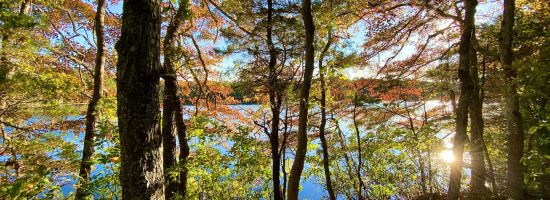Cape Cod fall foliage trees overlooking a pond