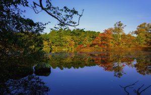 Fall Foliage beautiful trees on a lake