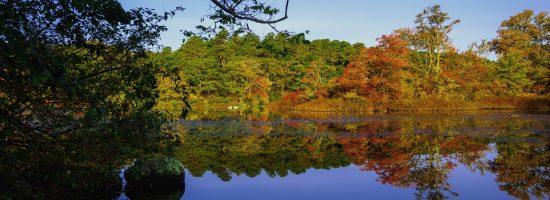 Fall Foliage Trees on pond
