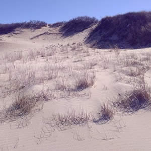 Sand dune topped with beach grass surrounded by blue skies