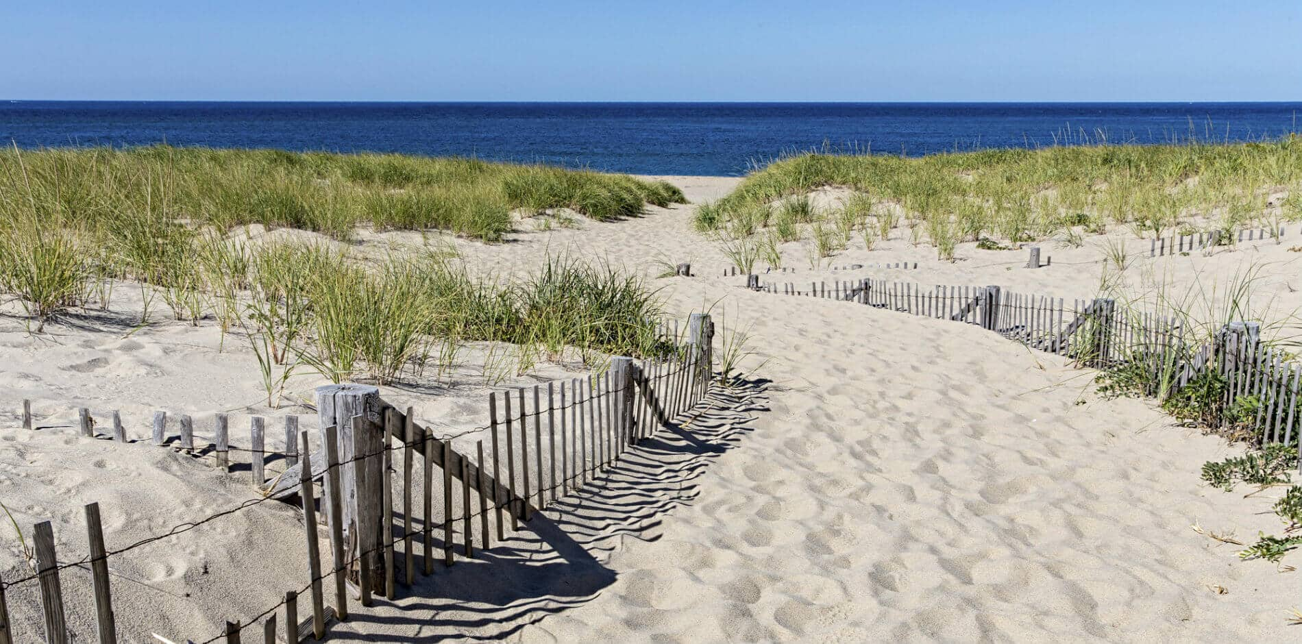 Beautiful sandy pathway surrounded by protected dunes covered in beach grass, leading to the deep blue ocean