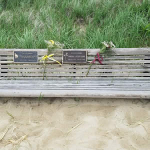 Weathered wood bench on a sandy beach in front of a small dune with green beach grass